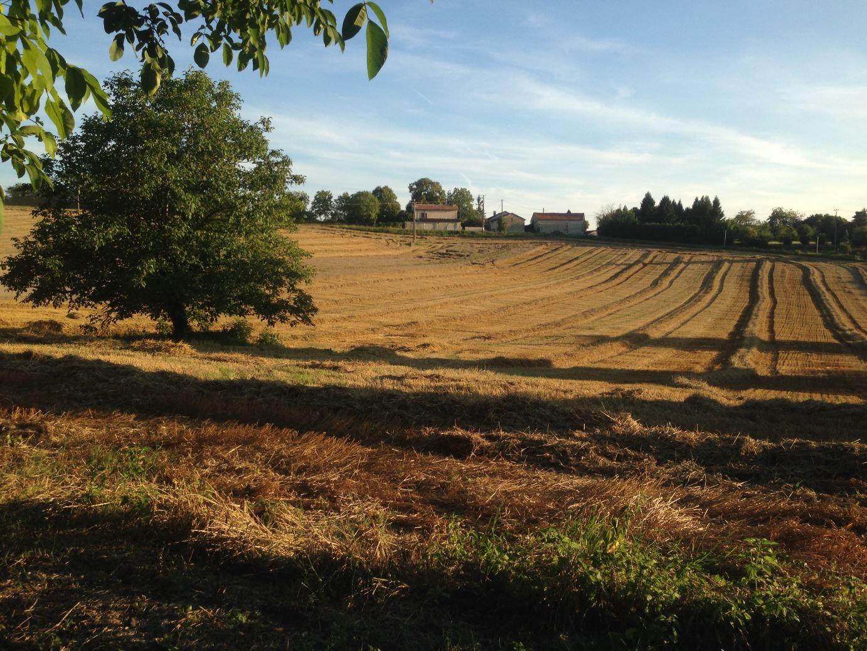Neighbouring fields evening view