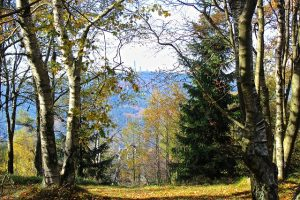 Ausblick auf den Feldberg im Taunus
