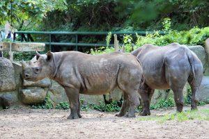 Rhino Zoo Berlin
