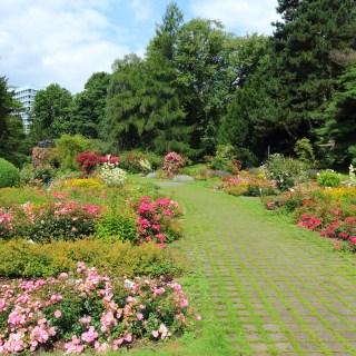 Rosengarten im Westfalenpark von Dortmund