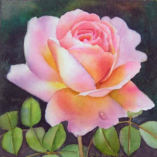 two new pink rose