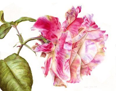 rose paintings and flower