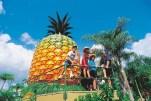 004428 Woombye Big Pineapple
