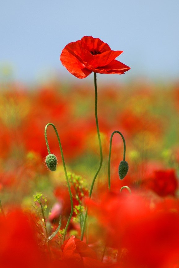 Is the Tall Poppy syndrome stopping your from stepping up?