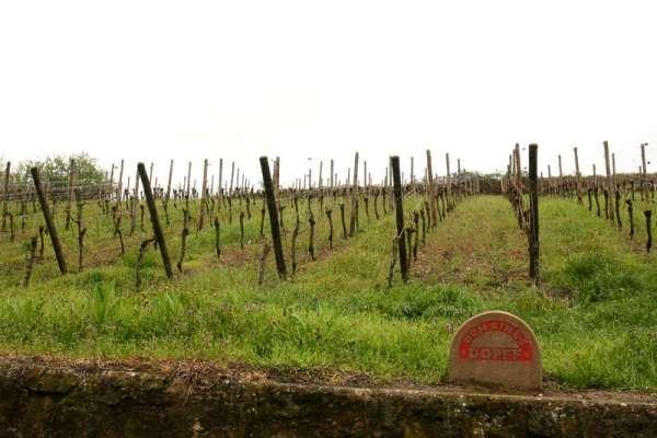 riquewihr-drop-frankrijk-elzas-wijngaard-druiven-dopff