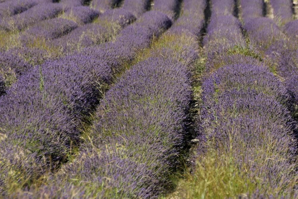De zeven mooiste plekken in de Provence