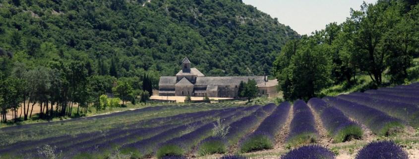 Het klooster Sénanque tussen de lavendelvelden in de Vaucluse