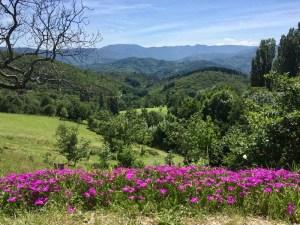 Wandelen uitzicht met bloemen