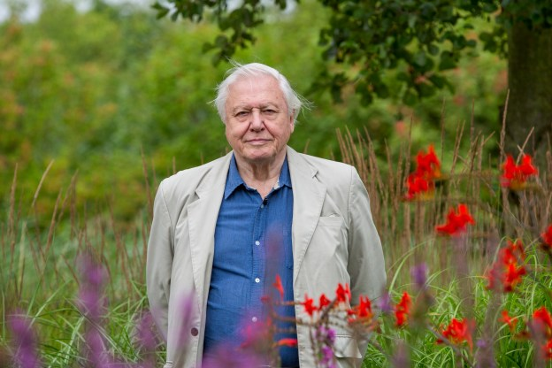 Picture of Sir David Attenborough standing among flowers