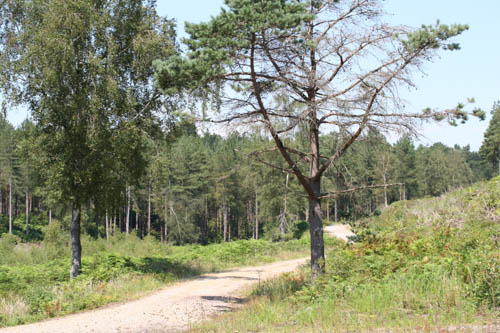 Track leading through grass and conifereous trees