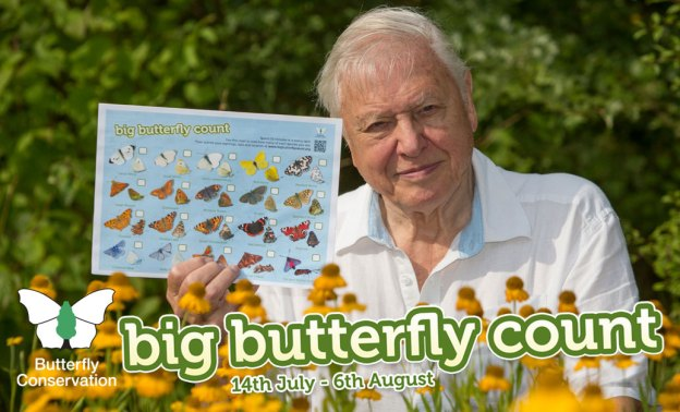 Big Butterfly Count 2017