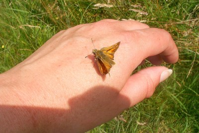 Small orange butterfly on the back of a human hand