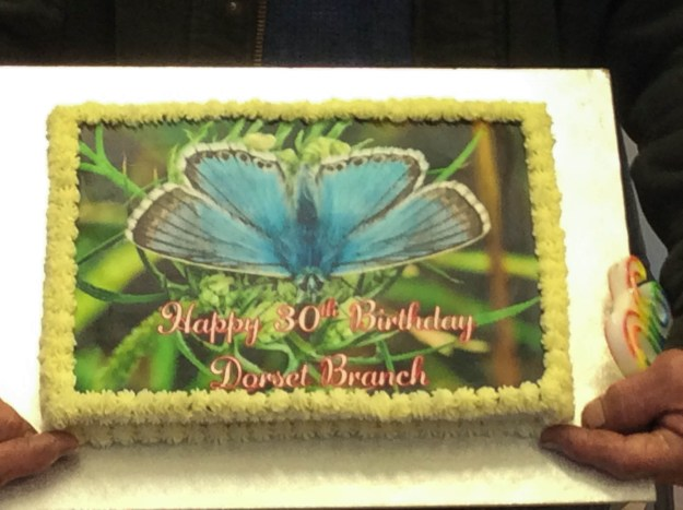A birthday cake with a photographic image of a blue butterfly on top