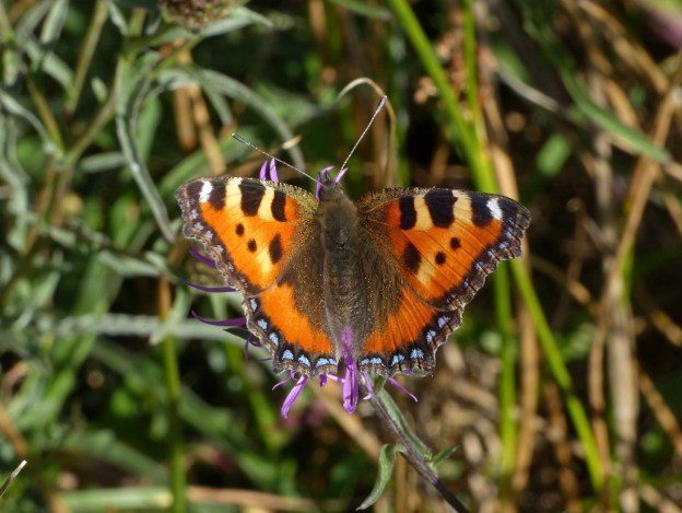 Orange, yellow, brown and blue butterfly on grass