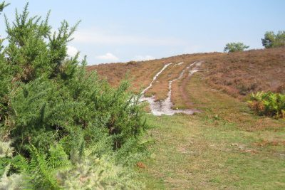 Path going up a hill covered in scrubby heather