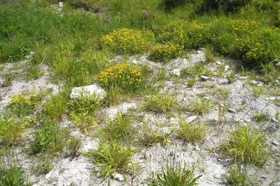Area of stony soil puncutated with plants