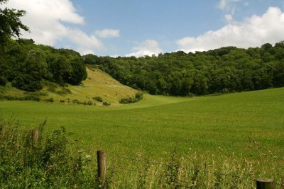 Woods and downland
