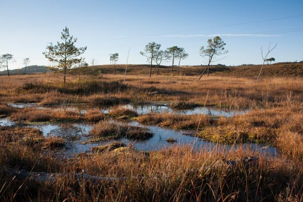 Wet heathland