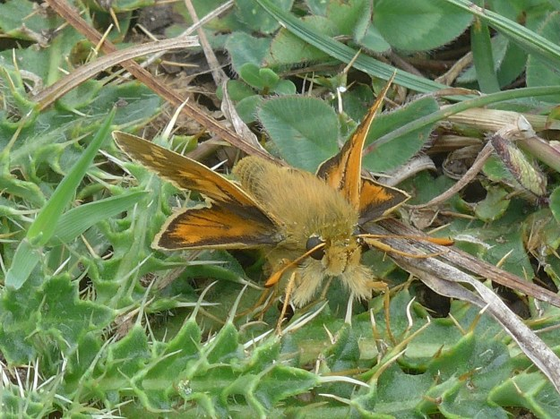 View of orange and brown butterfly on green plant