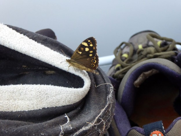 View of chocolate brown butterfly with creamy yellow markings on the wings - showing it resting on an old grey and white coloured slipper.