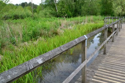 Boardwalk across wetland