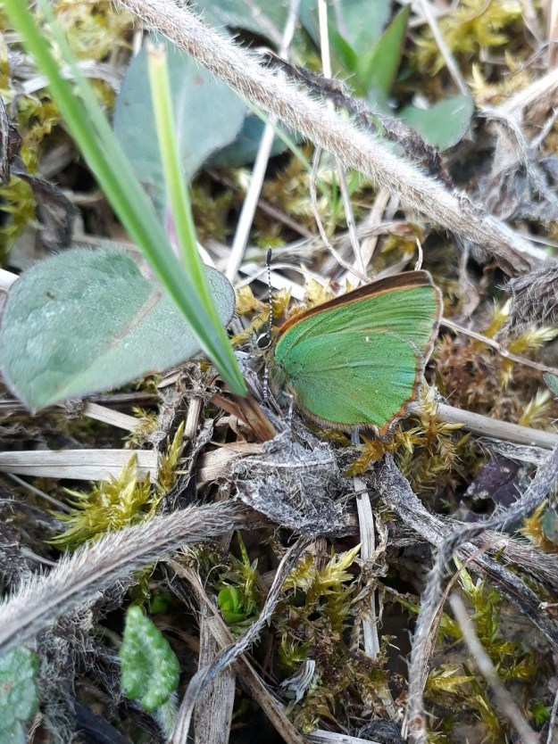 View of a green butterfly resting on the ground by a green plant
