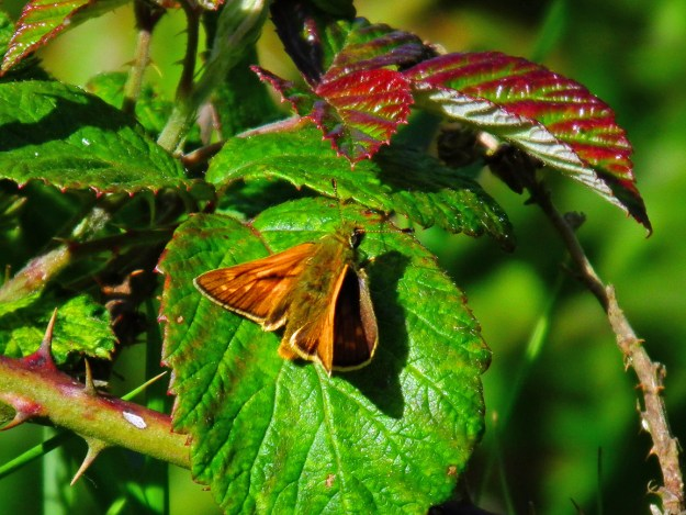 View of a golden brown butterfly resting on a green leaf