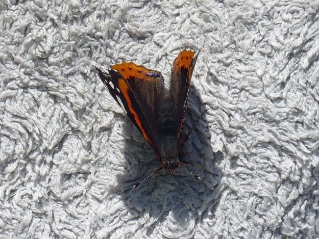 View of a red and black butterfly resting on a towel