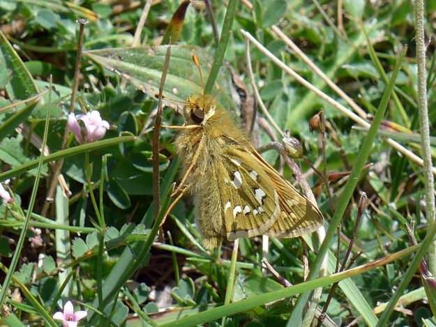 Greenish brown butterfly with white markings resting in green foliage
