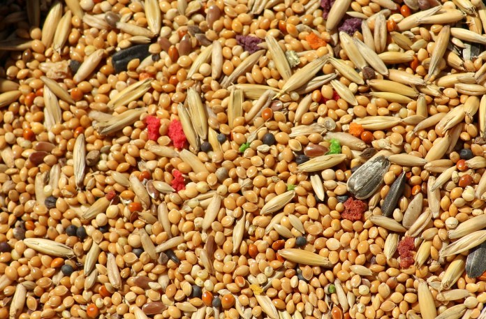 Millets uses in tamil, Millets benefits, uses of Millets, grains uses, grains benefits, தாணியங்கள், சிறுதானியங்கள், சிறுதானியங்கள் பயன்கள்,