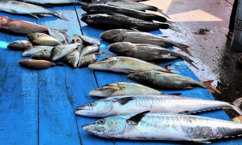 Največ rib pojedo na Maldivih, kar 166 kilogramov na prebivalca na leto, drugi pa so Islandci z »borimi« 90 kilogrami.