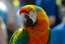 Photo of Zabavno odkritje: Tudi papige zardevajo!