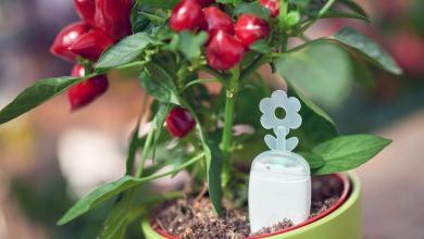 Photo of PlantRay – rešitev za pozabljivce