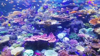 Photo of Koralni grebeni in okoljske spremembe