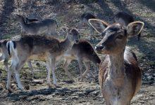 Photo of Med zdravilnimi vrelci in udomačenimi jeleni