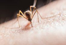 Photo of Kateri izdelki za zaščito proti pikom komarjev resnično delujejo?