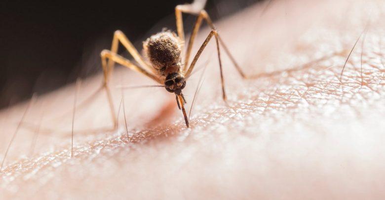 proti pikom komarjev, odganjanje komarjev, brez kemije, test, komar, komarji pik, komarji, tigrasti komarji, tigrasti komar, proti komarjim pikom, zaščita pred piki komarjev, zaščita ped komarjimi piki, repelenti, naravna zaščita pred komarji
