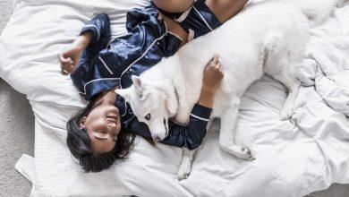 Photo of Študenti s pomočjo psov premagujejo stres