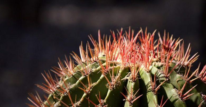 Biorazgradljiva plastika, kaktus, Sandra Pascoe,, raziskava, okolje, plastika,