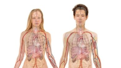 Photo of Japonski znanstveniki bodo človeške organe gojili v živalih