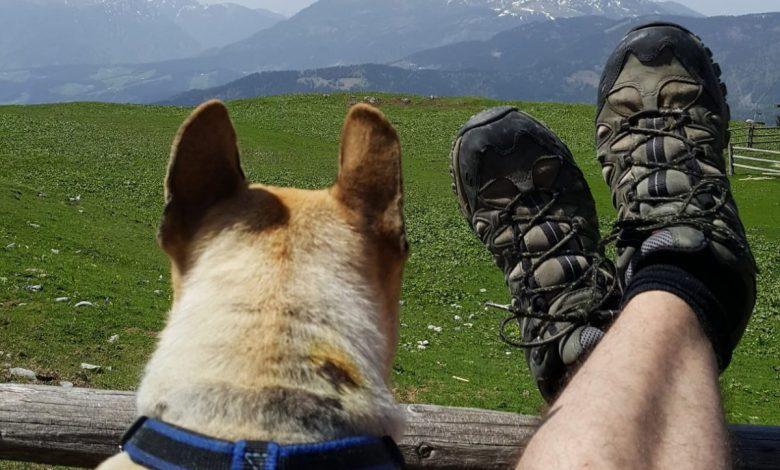 Svetovni dan varstva živali, 4. oktober, živalskih vrst, mednarodni dan oskrbnikov živali, Kolumbo, #MrKolumbo
