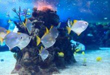 Photo of Nižanje kisika v oceanih vpliva na morsko življenje