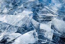 Photo of Znanstveniki na Antarktiki odkrili sledi deževnega gozda