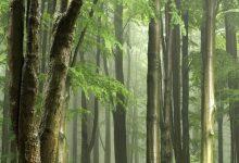 Photo of Tropski gozdovi izgubljajo sposobnost absorpcije ogljika