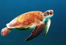 Photo of Ogrožena več kot polovica želvjih vrst