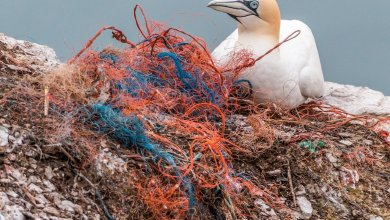 Photo of Plastični odpadki: znanstveniki o novih načinih zmanjševanja plastike