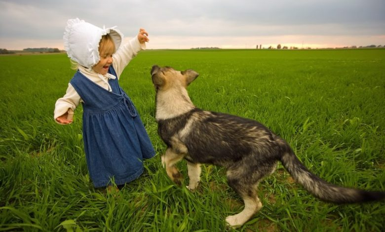 pomaga pri učenju, pes, psi, učenje, igra, domače živali, učenje, Znanstveniki,