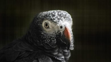 Photo of Iz angleškega parka zaradi preklinjanja umaknili papige