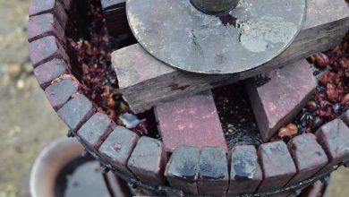 Photo of Arheologi odkrili vinsko prešo iz železne dobe