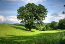 Photo of Evropski zeleni teden letos povsem virtualno